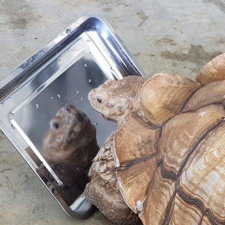 Replace rehome tortoise image (1)